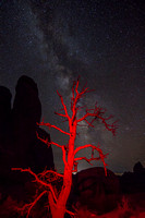 Red Dead Juniper and the Milky Way