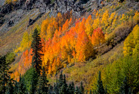 Fall Colors on Red Mountain Pass in Colorado