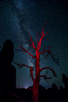 A Dead Juniper Tree and the Milky Way