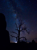 My Favorite Dead Juniper and the Milky Way